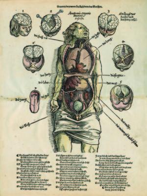Anatomische prent - Ink.S_7665_3